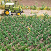 H0-Kartoffelpflanzen
