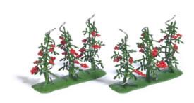 H0 6 Tomatenpflanzen