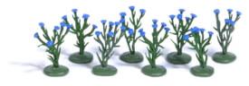 H0 8 Kornblumenpflanzen