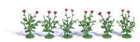 H0 6 Klatschmohnpflanzen