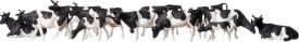 Z Kühe, schwarz gefleckt