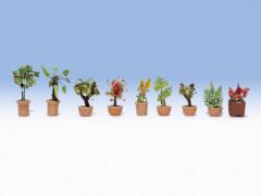 N Zierpflanzen in Blumenkübeln