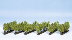 Weinreben, 24 Rebstöcke