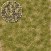 Grasbüschel 2-fbg,kurz,Spätso