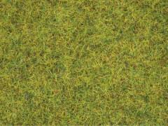 Noch 08310 Sommerwiesen-Gras