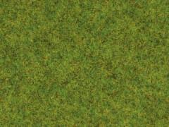 Noch 08300 Frühlingswiesen-Gras