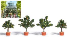 H0 4 Zitrusbäume