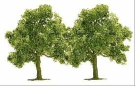 H0 2 Obstbäume (75)