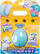 Suprise Chick SGL PK