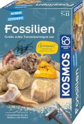 Kosmos Fossilien