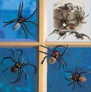 Spinne Saugnapf, 8 cm