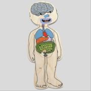 Beleduc Lagen-Puzzle Dein Körper Junge