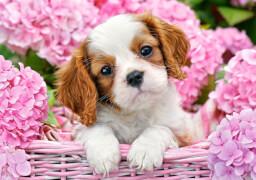 Spielwaren: Pup in Pink Flowers, Puzzle 500 Teile