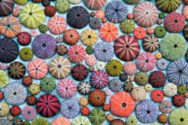 Puzzle Bunte Seeigelgehäuse