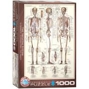 EuroGraphics Puzzle Das Skelett 1000 Teile