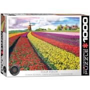 Eurographics Tulpenfelder Niederlande