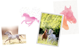 Handlettering Starter-Set Pferdefreunde