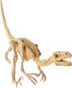 Velociraptor zum Ausgraben +