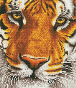 DIAMOND DOTZ Bengal-Tiger 36x42 cm