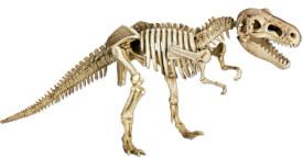 Mini-Ausgrabungsset T-Rex T-Rex World