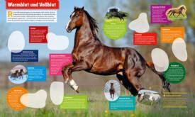 Tessloff WAS IST WAS Stickerheft Pferde