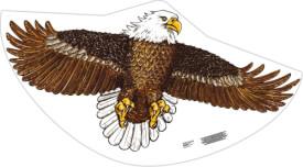 Seeadler Kinderdrachen ca. 122 x 68 cm