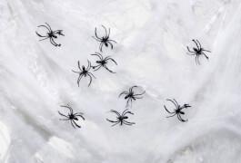 Riesen Spinnennetz mit 12 Spinnen