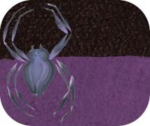 Split Cake Spider, 6ml