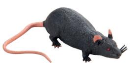 Ratte schwarz 16 cm schw. STD