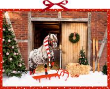 Dotti feiert Weihnachten, Wand-Adventskalender