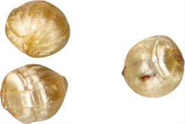 Goldnüsse mit Schokofüllung im Schmuckgl